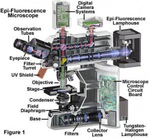 fluorointrofigure1